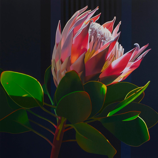 protea by paul blomkamp